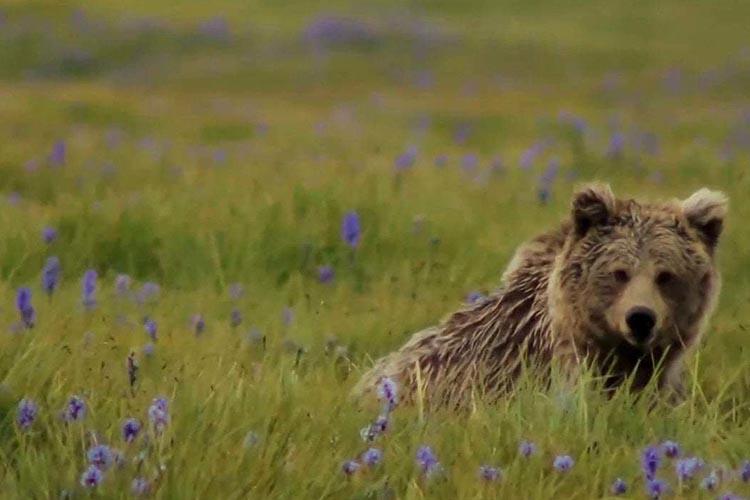 skardu wildlife.jpg