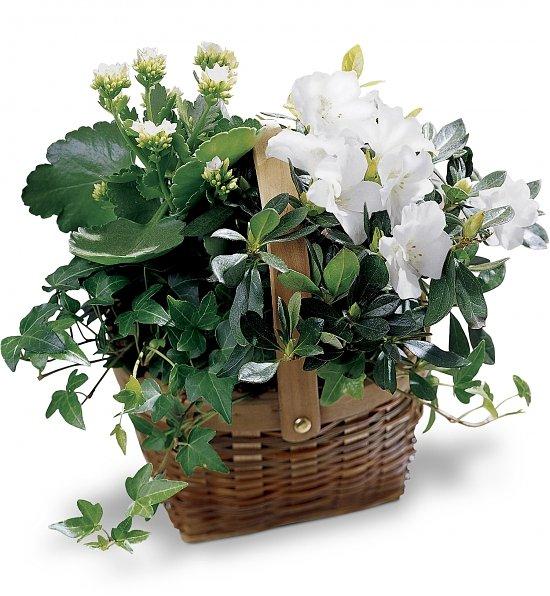 Gardener's Pot