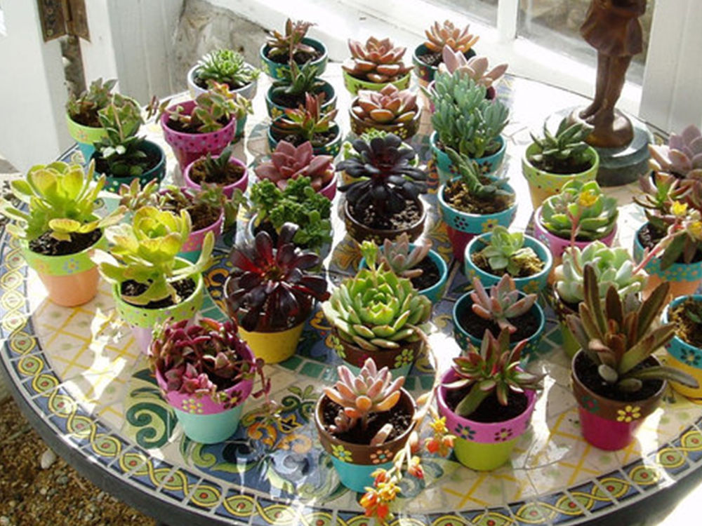 3.Hand-painted potted Succulents