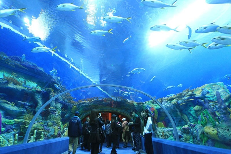 2.	Chimelong Ocean Kingdom, Hengqin-China