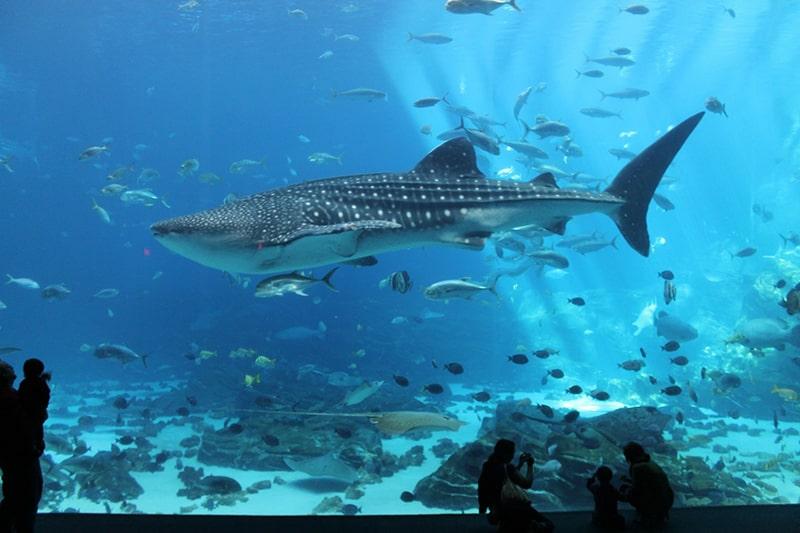 1.Georgia Aquarium, Atlanta- USA