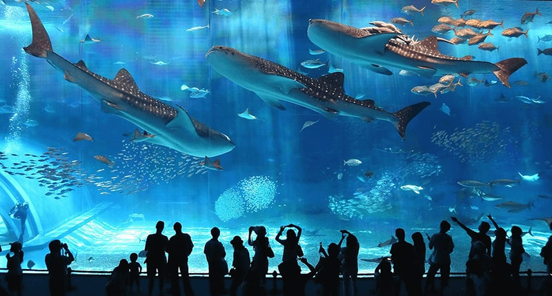 3.	Okinawa Churaumi Aquarium, Okinawa-Japan