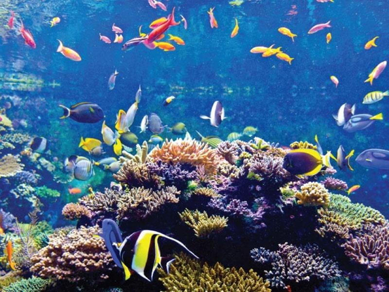 6.S.E.A Aquarium-Singapore