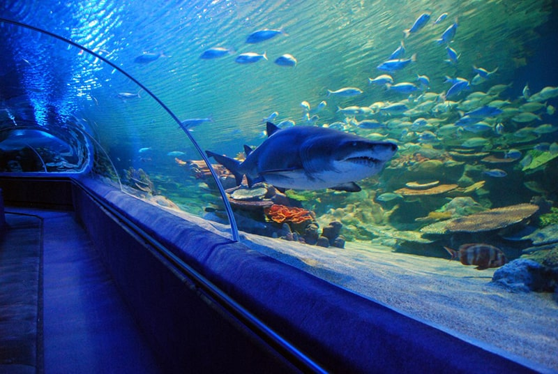 8.	Turkuazoo Aquarium-Turkey