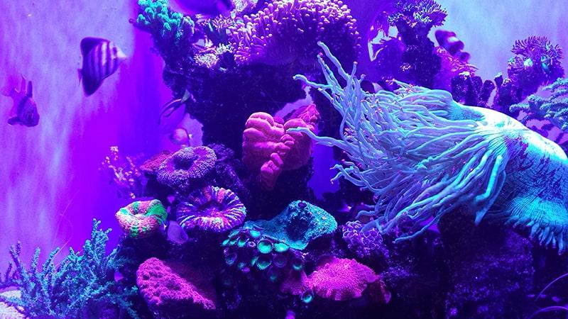 5.Aquarium Of Western Australia