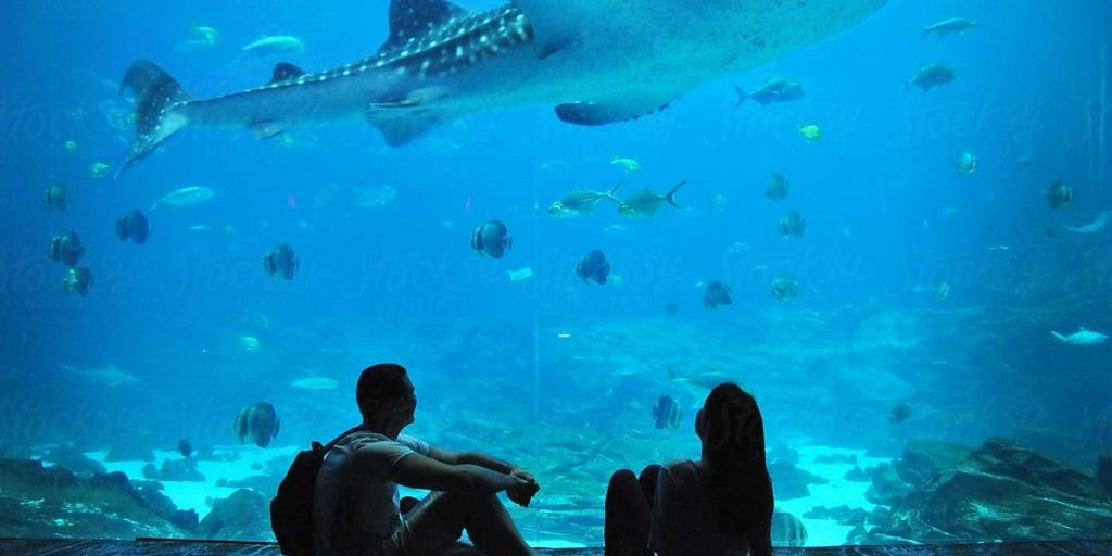Top Marine Displays You Should Visit On Your Honeymoon