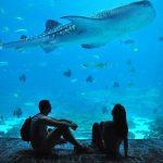 Top Marine Displays You Should Visit On Your Honeymoon