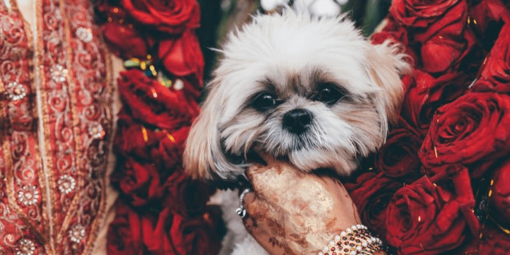 How to Include Your Beloved Pets in Your Wedding?