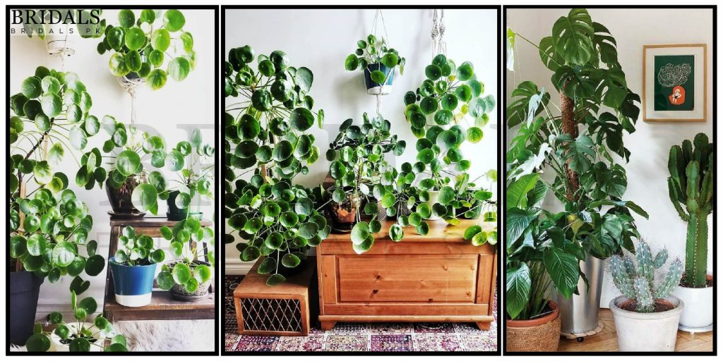 12 Benefits Of The Money Plant According To Feng Shui And Vastu Shastra